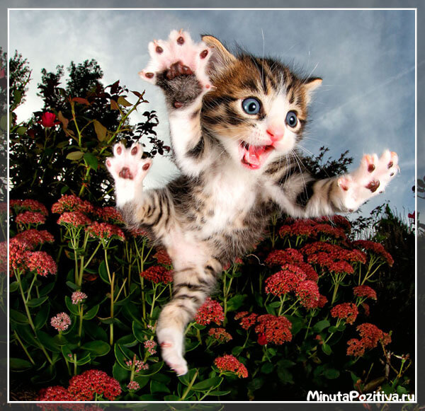 Картинки с котятами - парящие котята