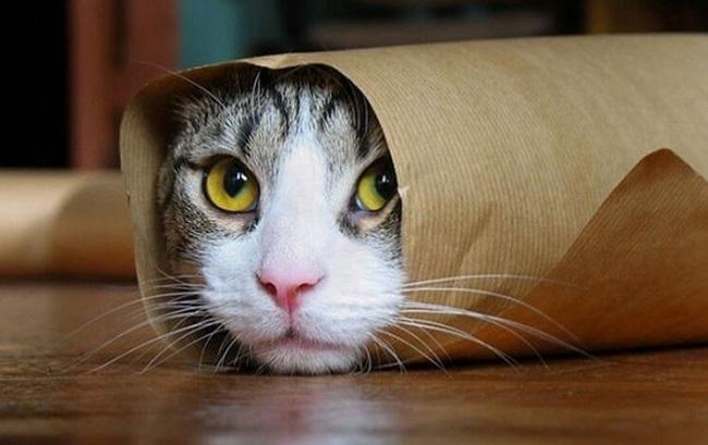 Смешные коты на фото