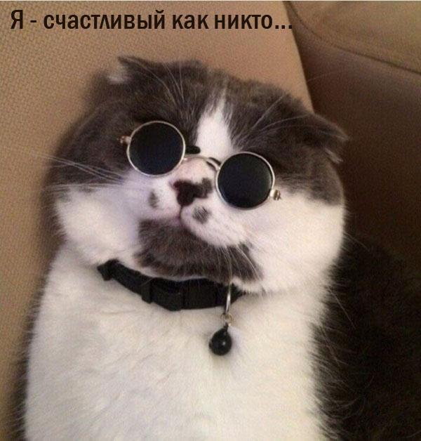 Смешные коты - кот Лепса