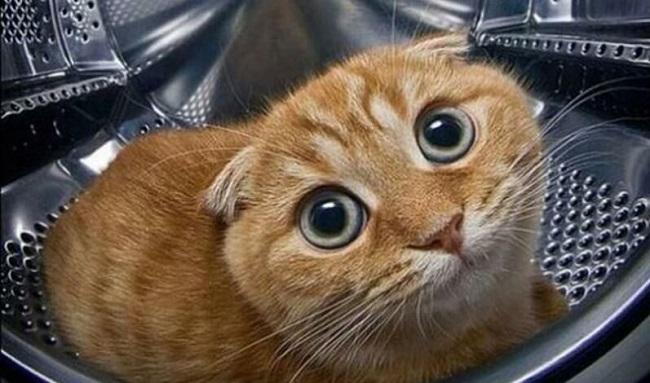 Кот в стиральной машине - смешное фото кота