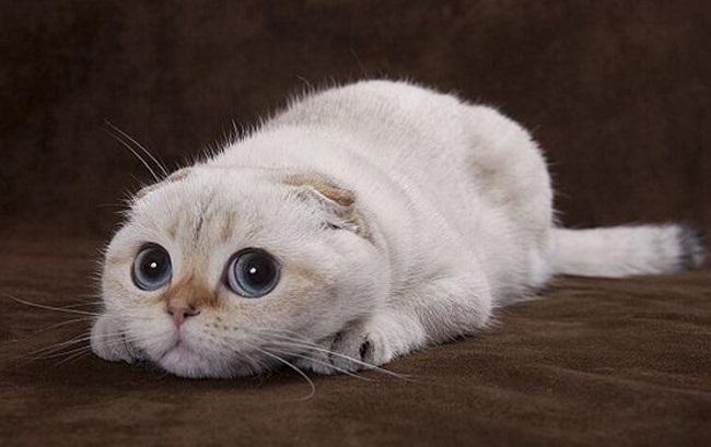 Самый смешной кот - фото