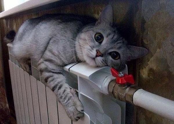 Смешной кот фото на батарее