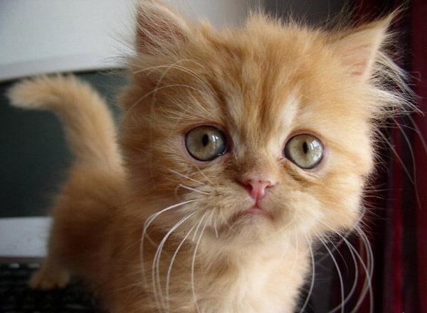 Картинки милых котят