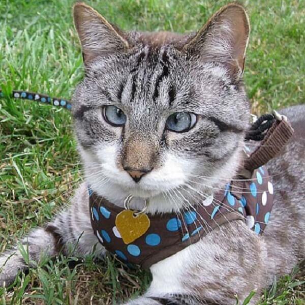 Смешная косоглазая кошка