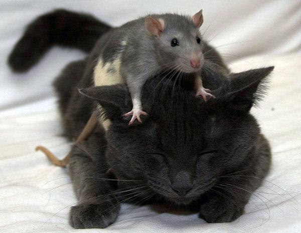 Смешное про кошек и котов, коты и мыши