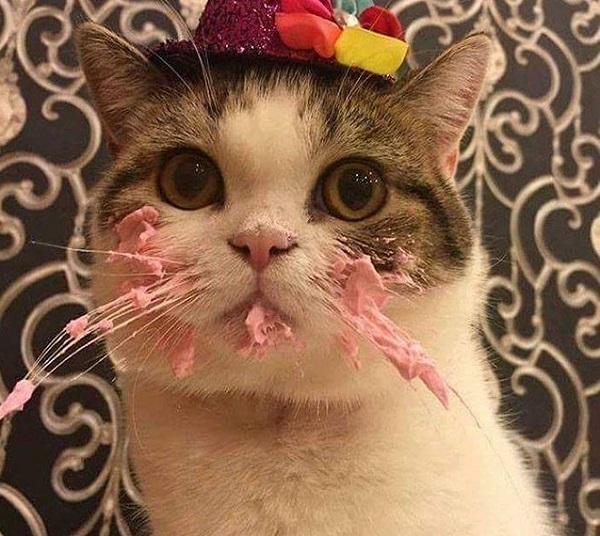 Очень смешной кот фото