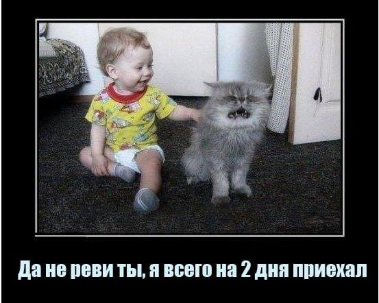 Свежие и очень смешные анекдоты до слез