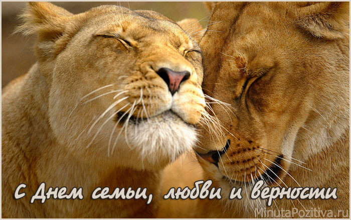 День семьи любви и нежности картинки красивые животные