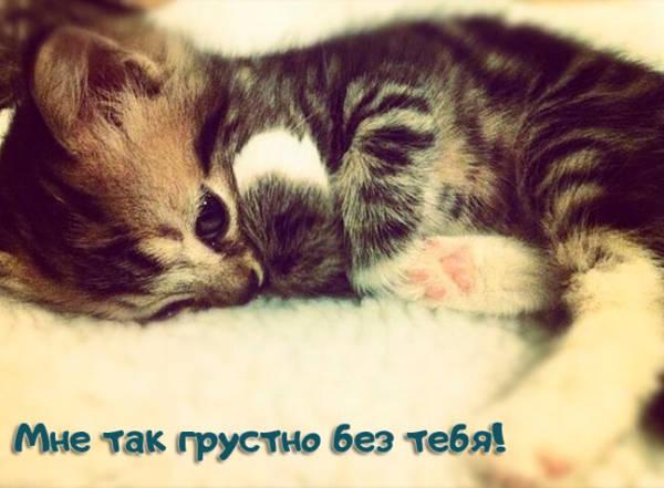 Скучающие картинки котенок