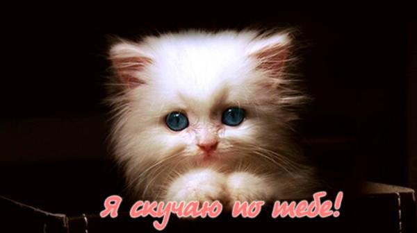 Картинки скучаю по тебе котята