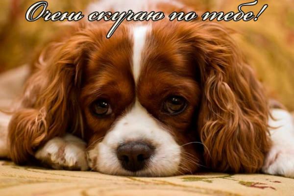 Очень скучаю по тебе картинки собака