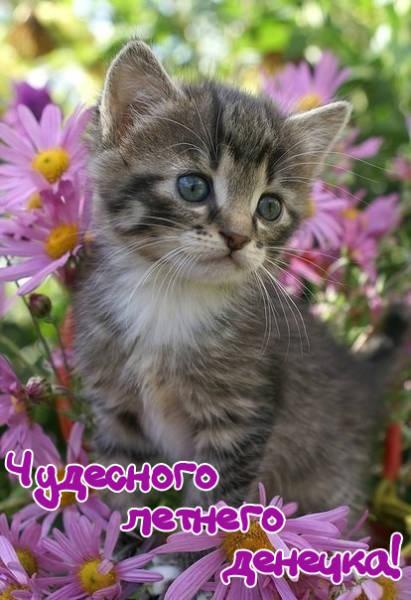 Доброго утра и хорошего дня - красивые летние картинки с котятами