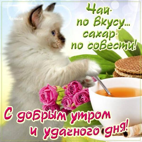 Очень красивая картинка с Добрым утром (котята)