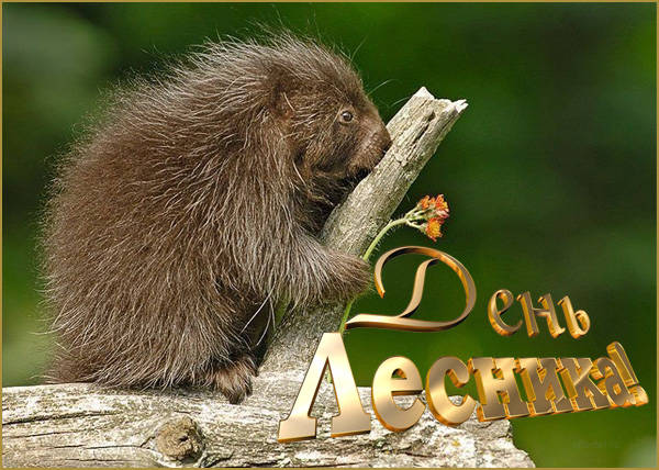 День работников леса - открытки и поздравления с Днем лесника