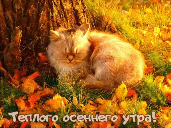 Доброго теплого осеннего утра картинки