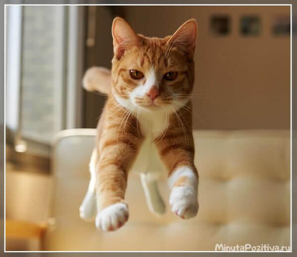 Прикольные картинки с летящими котятами