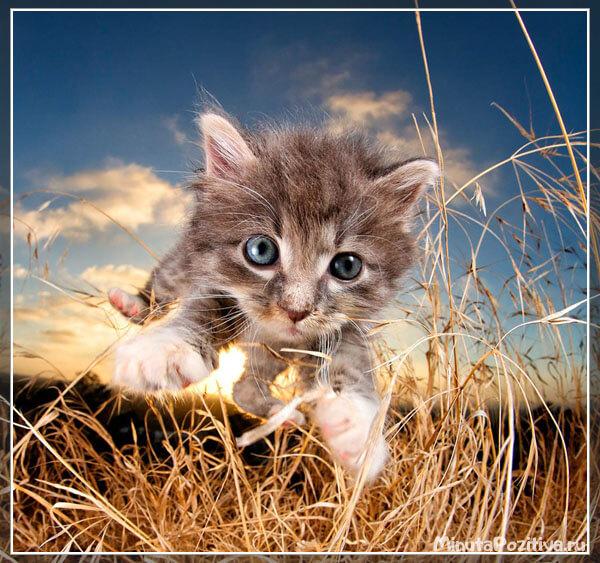 Картинки с котятами (парящие котята)