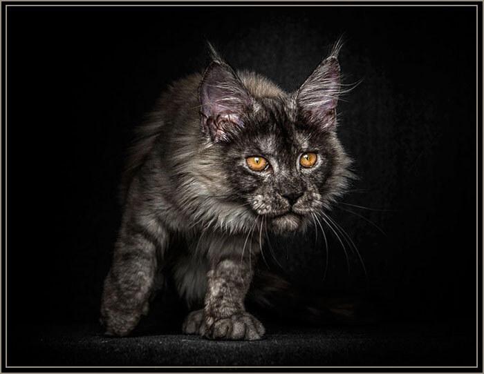 Фото черных майкунов