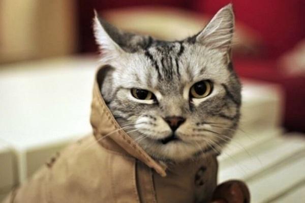 Смешное про котов - фото