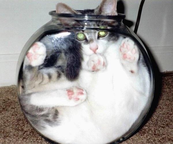 Самые смешные коты фото