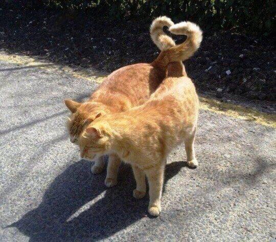 Смешные коты и кошки рыжие