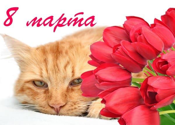 Праздником, открытка с кошкой 8 марта
