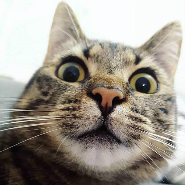 Самые смешные коты - уморительные фото