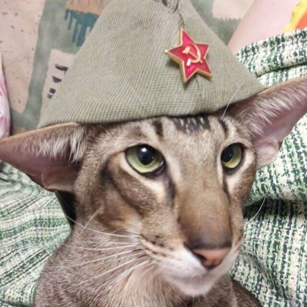 Фото смешной кот