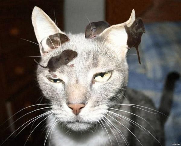 Смешные кошки и коты - 22 фото
