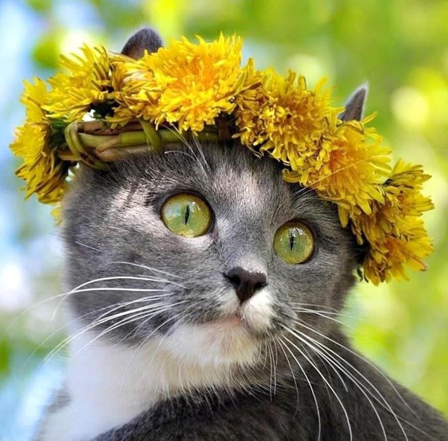 с добрым утром картинки с котом и гнездом на голове была только красивой