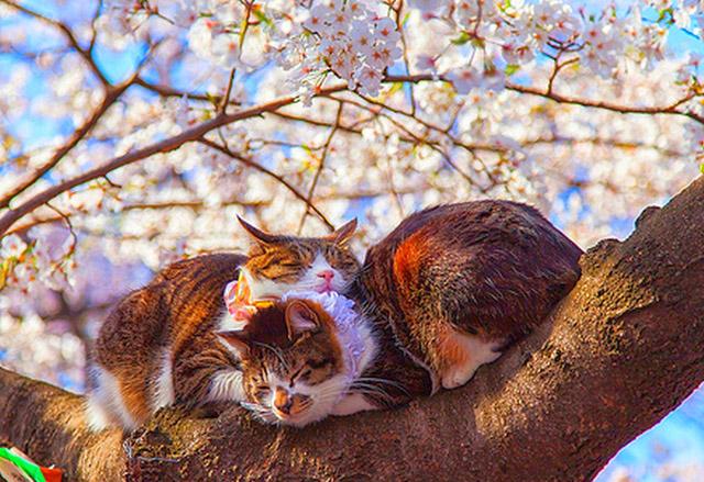 Весеннее настроение коты