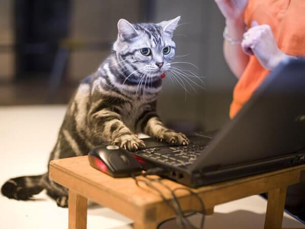 Кот с компьютером прикольные картинки