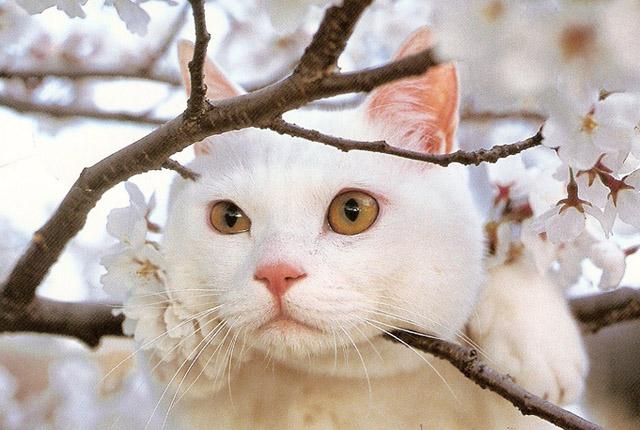 Весенние коты картинки