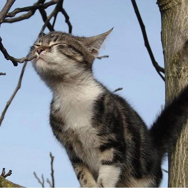 котята смешные фото, милые котята