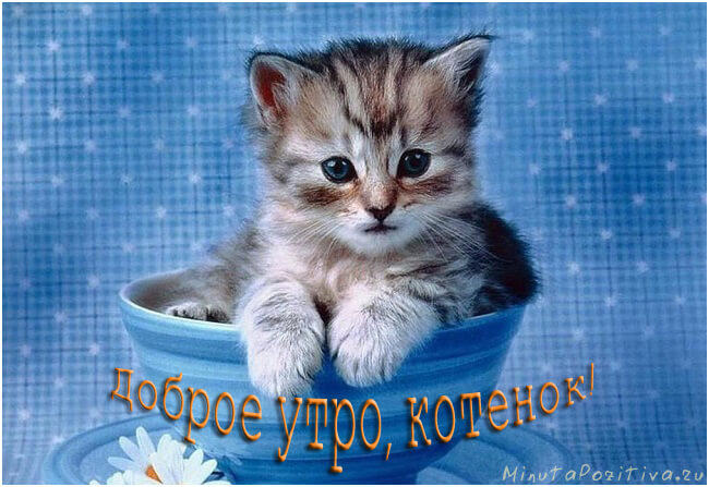 С добрым утром картинки прикольные котенок