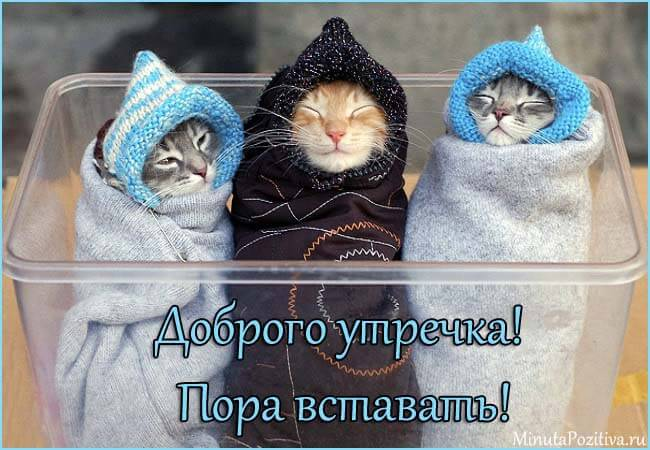 Котята с Добрым утром картинки