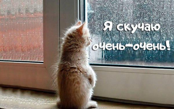Я скучаю очень очень картинки котята