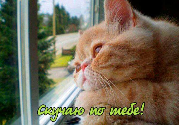 Скучаю по тебе - картинки с котами