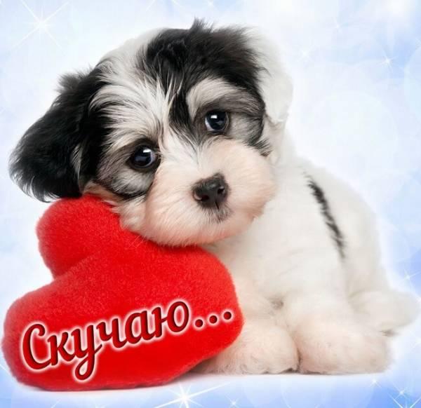 Скучаю по тебе картинки щенок с сердечком
