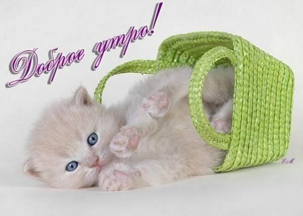 С Добрым утром - красивые летние картинки с котятами