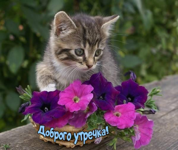 Доброе утро котенок картинки