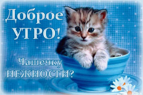 Картинки с Добрым утром прикольные с котятами