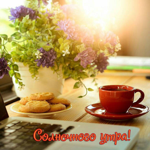 Доброе утро картинки летние бесплатно