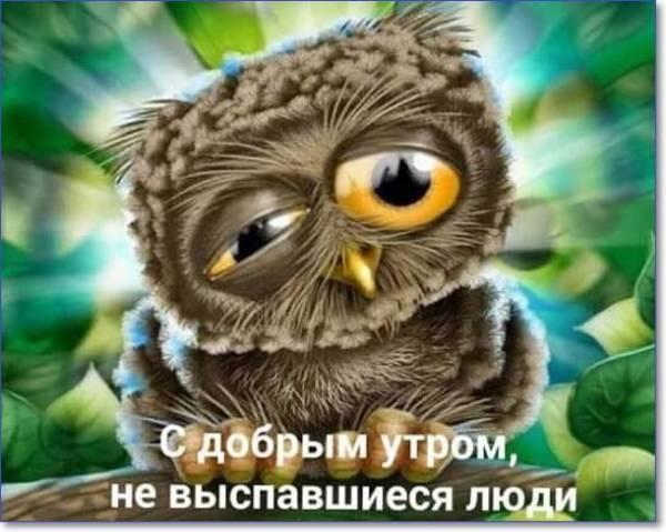 С добрым утром сова - картинки прикольные