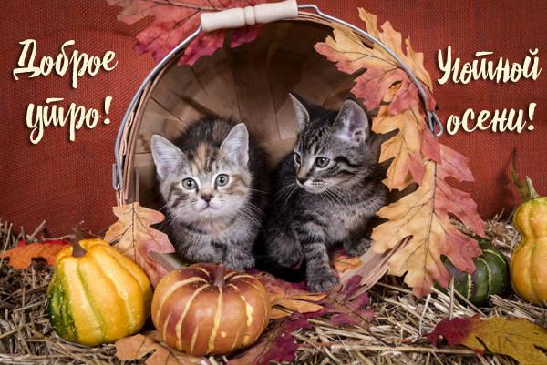Добрые осенние картинки с Добрым утром с котятами