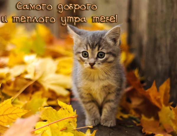 Осенние картинки с Добрым утром котики