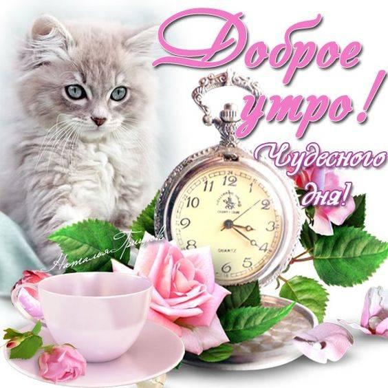 С Добрым утром и чудесного дня картинки с котятами