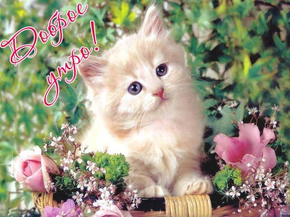 Доброе утро - красивые картинки с котятами