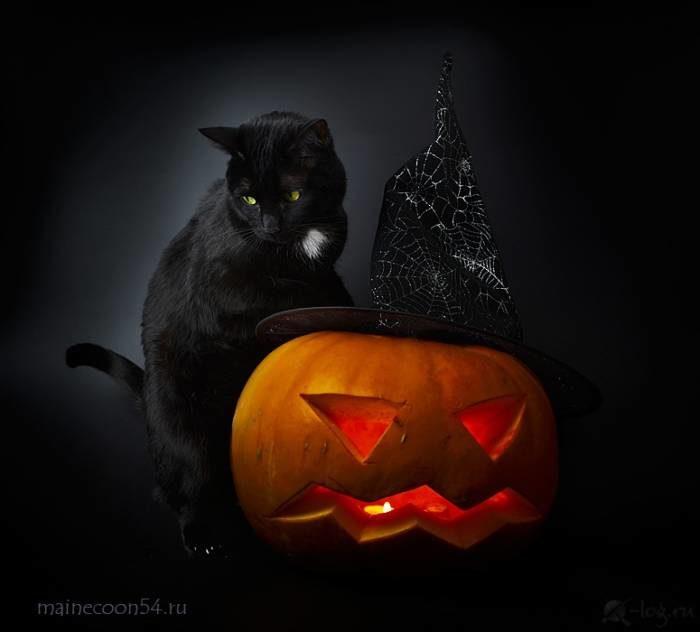Красивые и прикольные картинки на Хэллоуин с котами