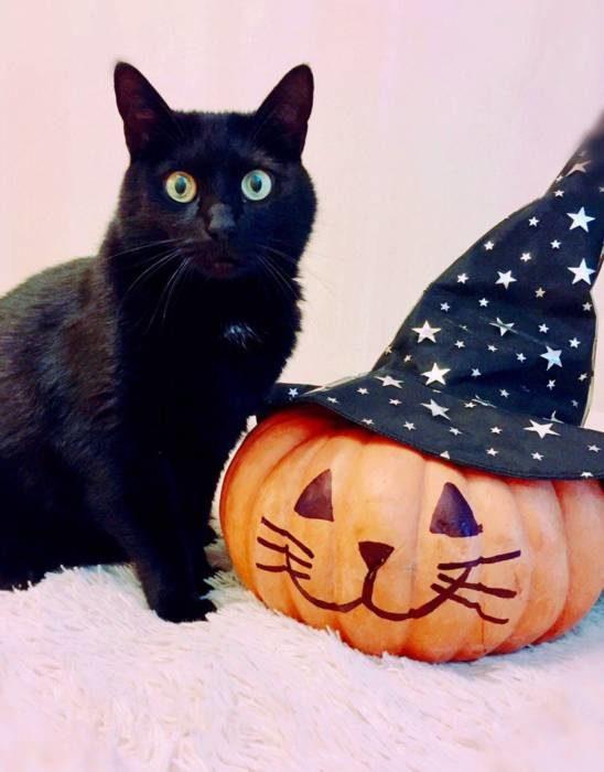 Красивые и прикольные картинки на Хэллоуин - кот и тыква